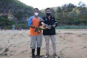 Lestarikan Satwa Laut, PJB Telah Melepas 3000 Tukik ke Laut Bebas